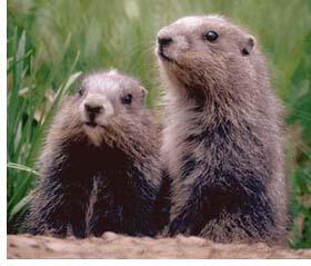 groundhog this blog needs movies